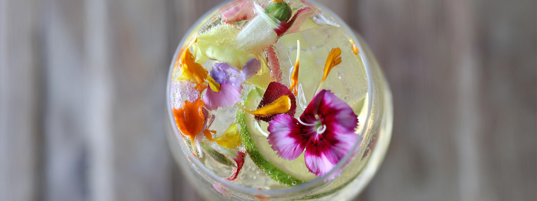 Gin + Elderflower Tonic