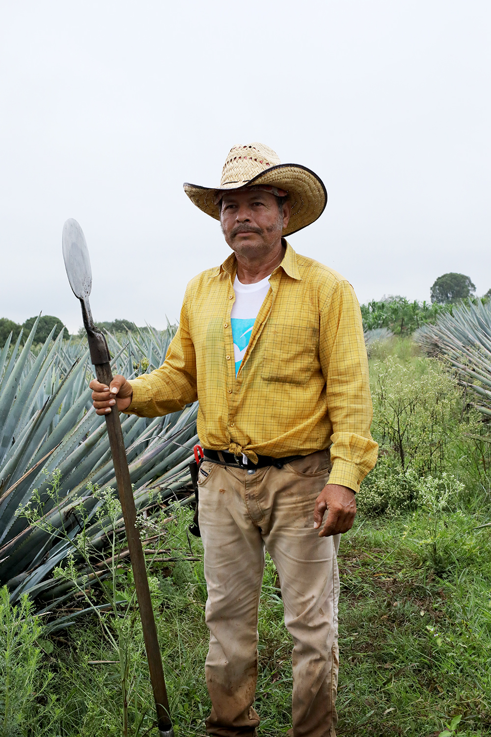 man in agave field