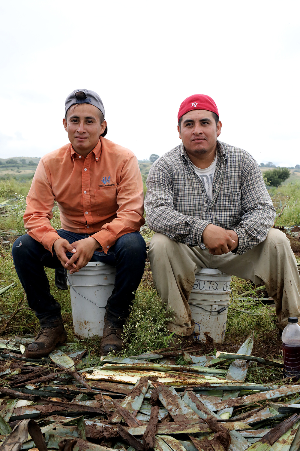 brothers in agave field