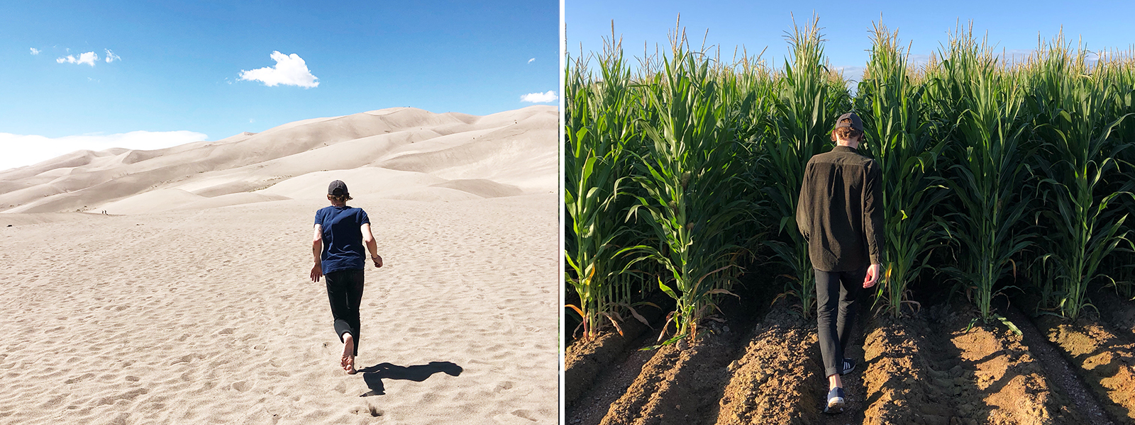 Running through Great San Dunes National Park and Preserve. Cornfields in Colorado