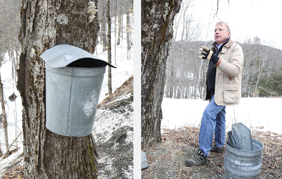 Arnold Coombs taps a maple tree