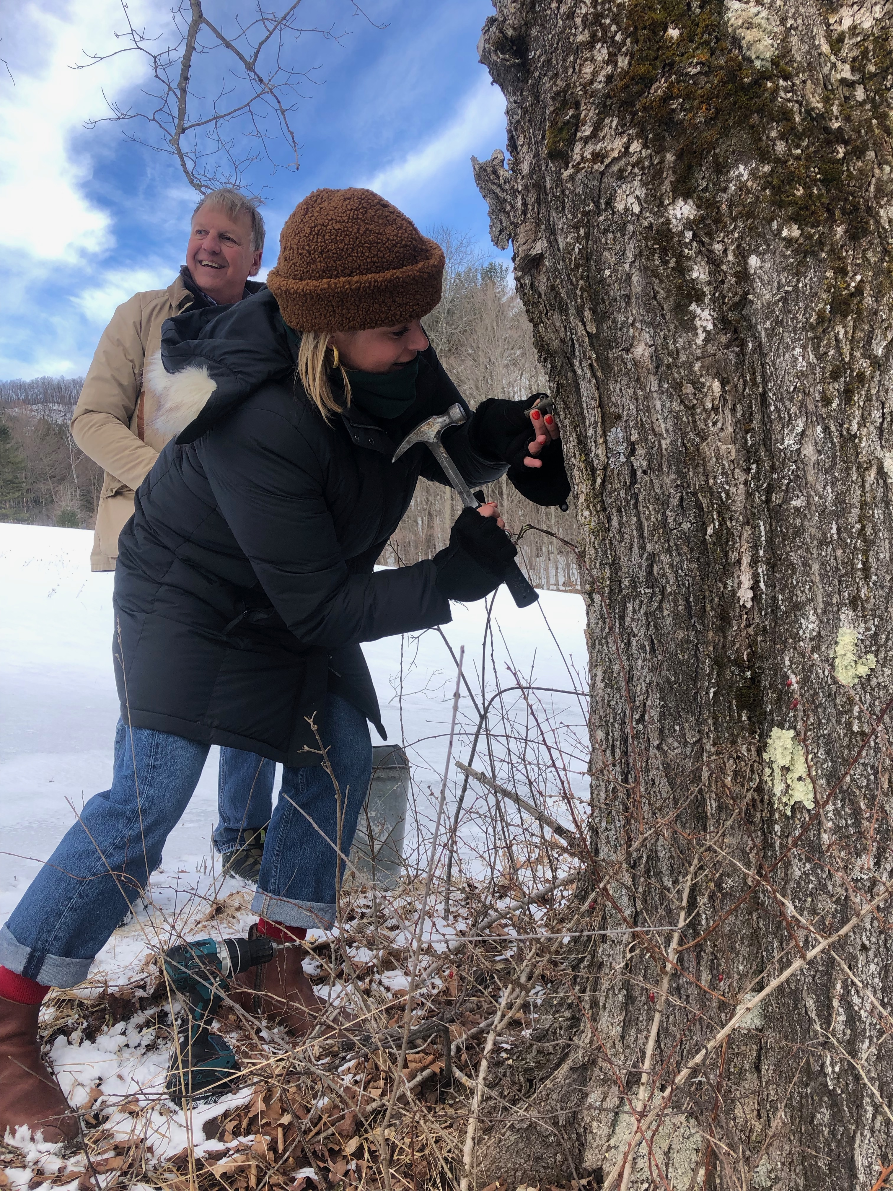 Tapping maple trees with Arnold Coombs