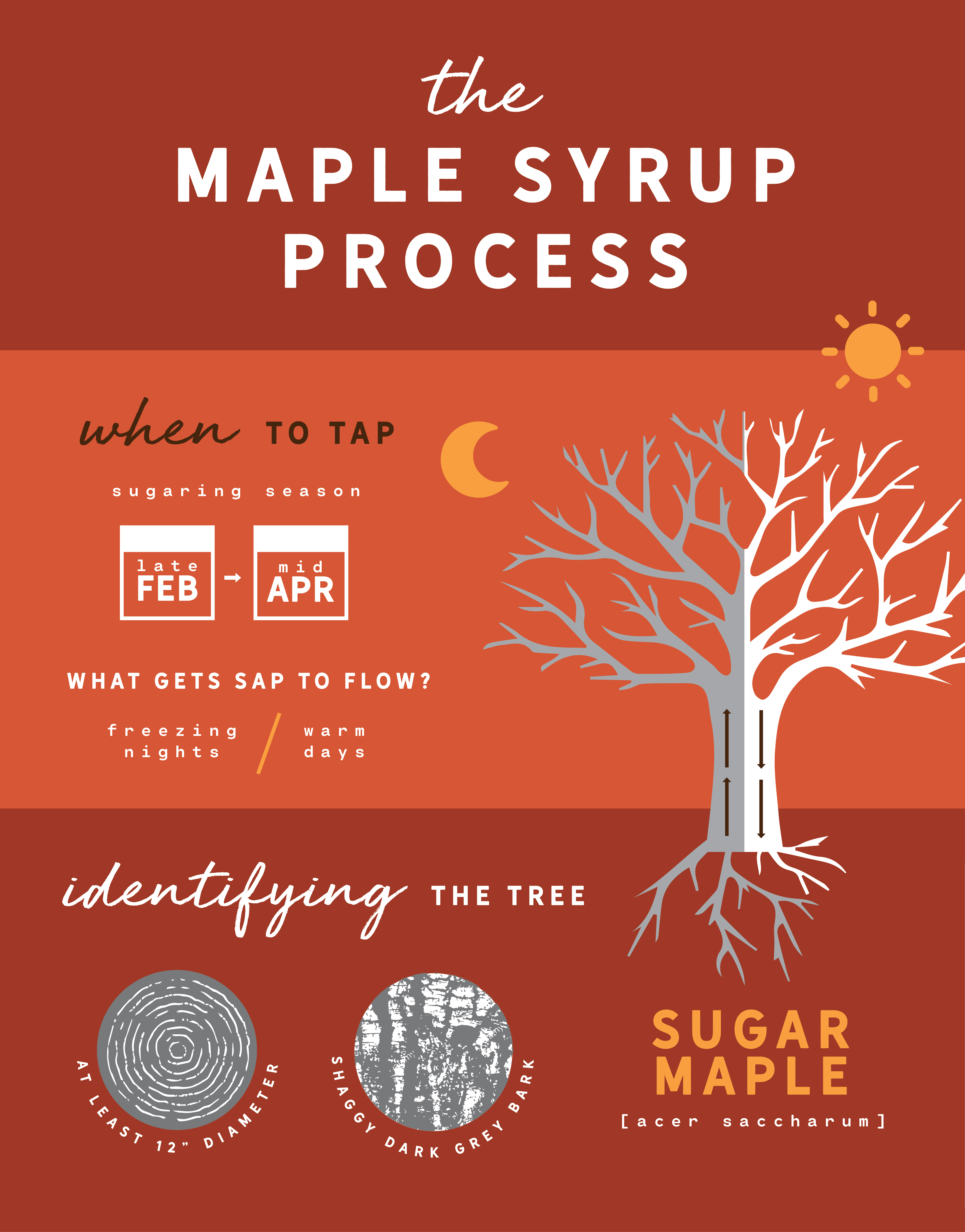 When to tap a maple tree